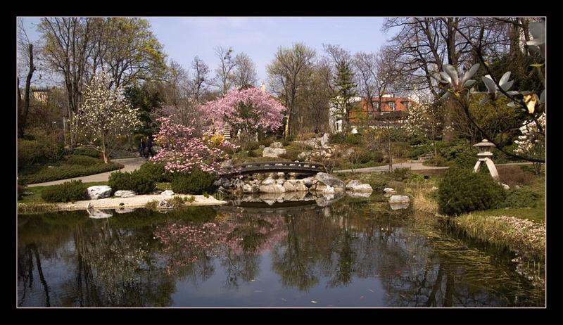 Japan im Frühling in Wien