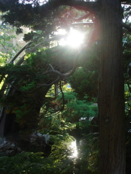 Japanes Tea Garden