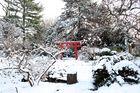 Japangarten im Schnee
