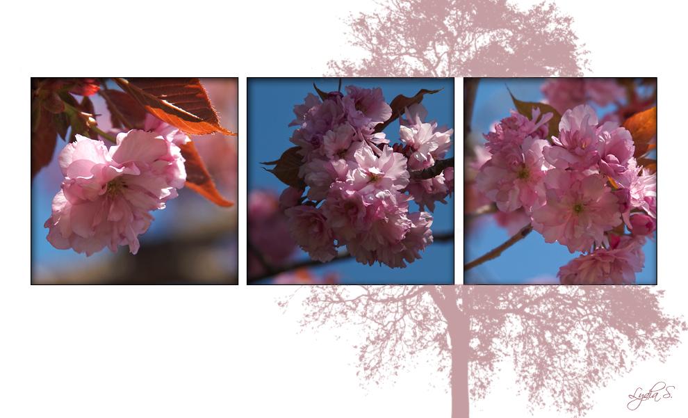 ...Japanische Blütenkirsche...