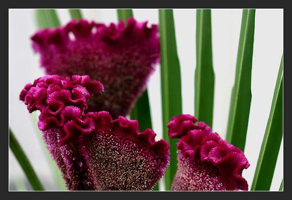 Japanische Blumensteckkunst Ikebana