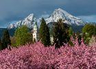 Japanische Kirschblüte im Kurgarten von Berchtesgaden