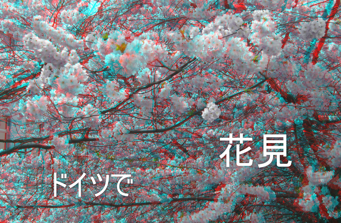 Japanische Kirsche  (3D-Foto)