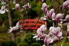 Japanischer Frühling