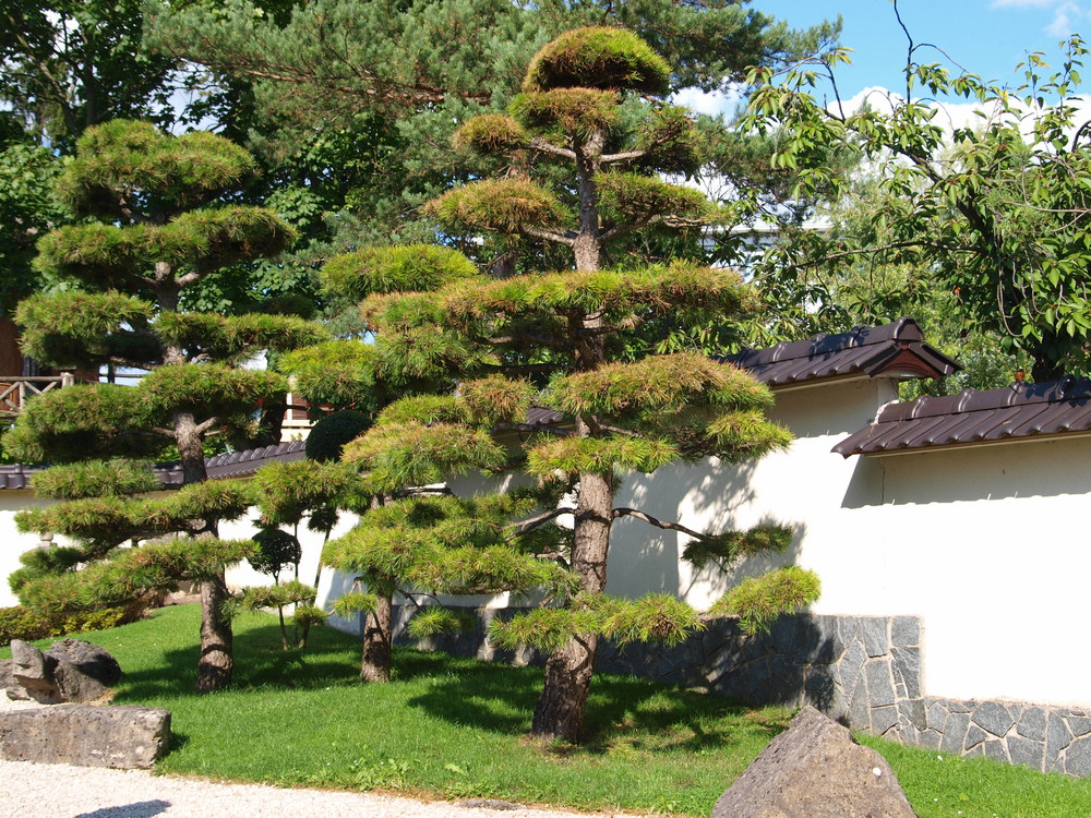 japanischer garten foto bild pflanzen pilze flechten b ume nadelb ume bilder auf. Black Bedroom Furniture Sets. Home Design Ideas
