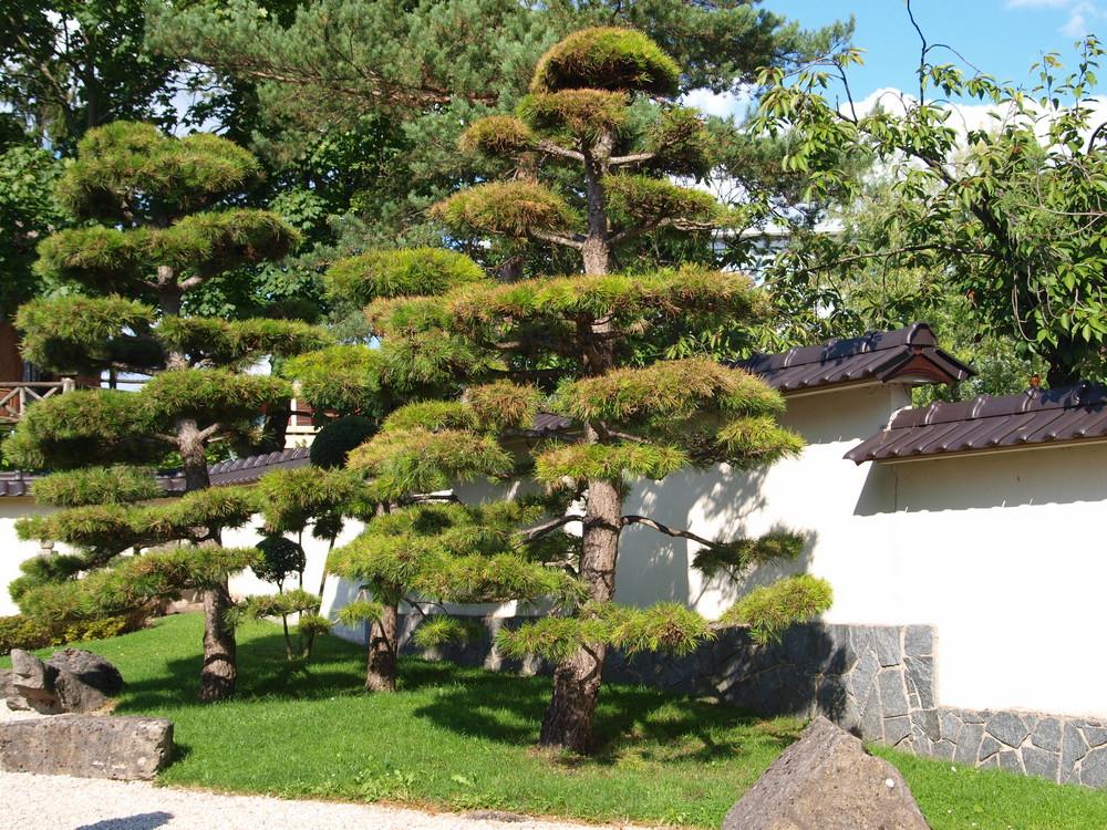 japanischer garten foto bild pflanzen pilze. Black Bedroom Furniture Sets. Home Design Ideas