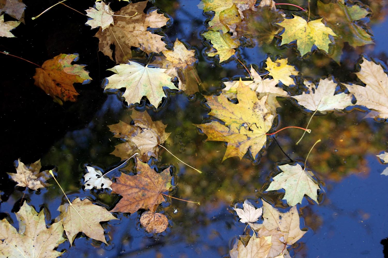 Japanischer Herbst