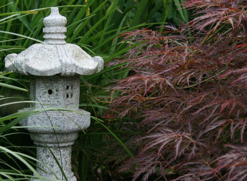 Japanischer Zwergfächerahorn