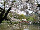 Japans 5. Jahreszeit