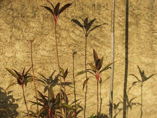 Jardim decorado com as sombras