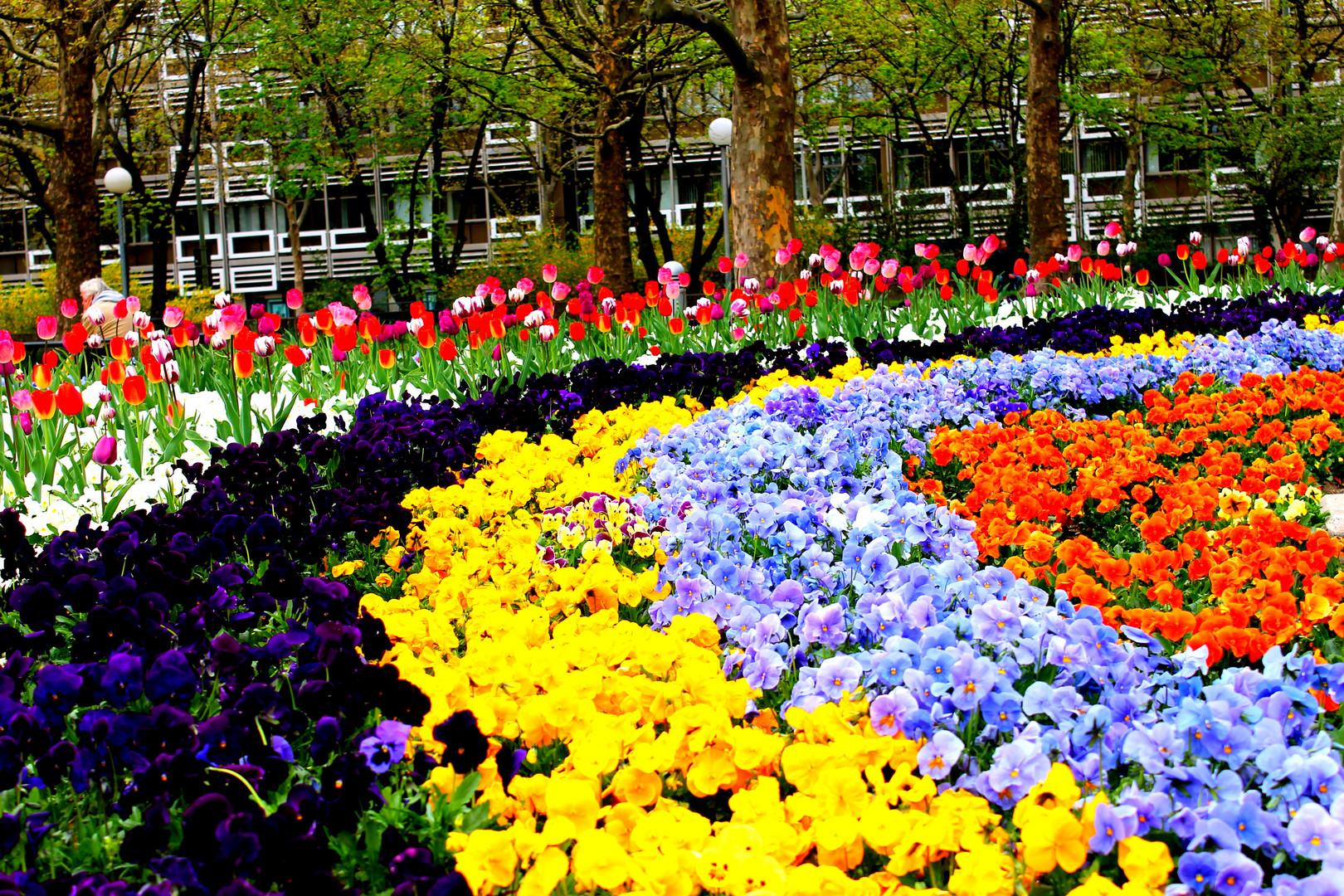Jardin Aleman