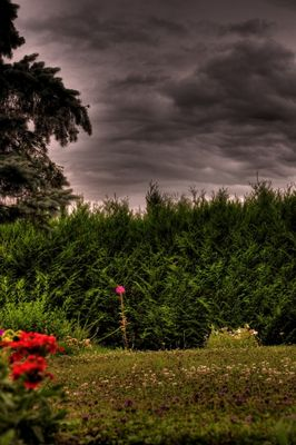 jardin avant la pluie
