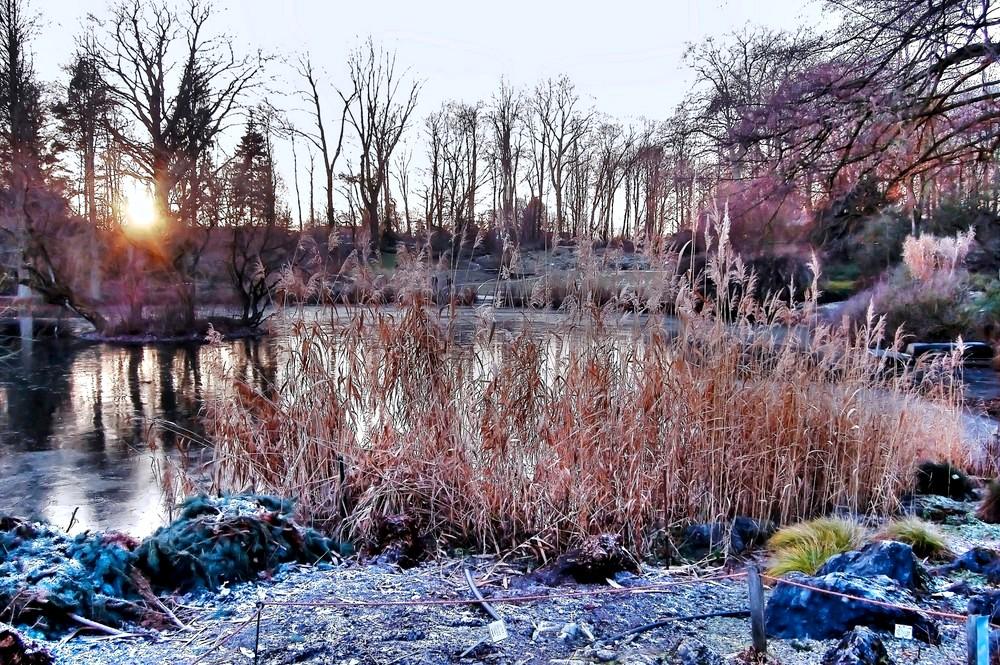 jardin botanique ,muenster