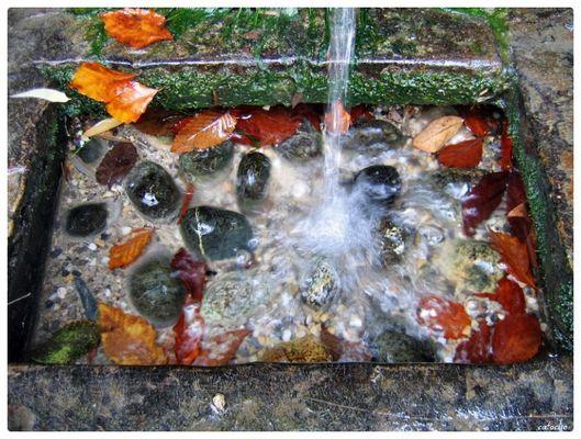 jardin d'automne zen