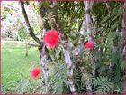 jardin de Balata1