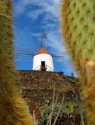 Jardin de Cactus #1