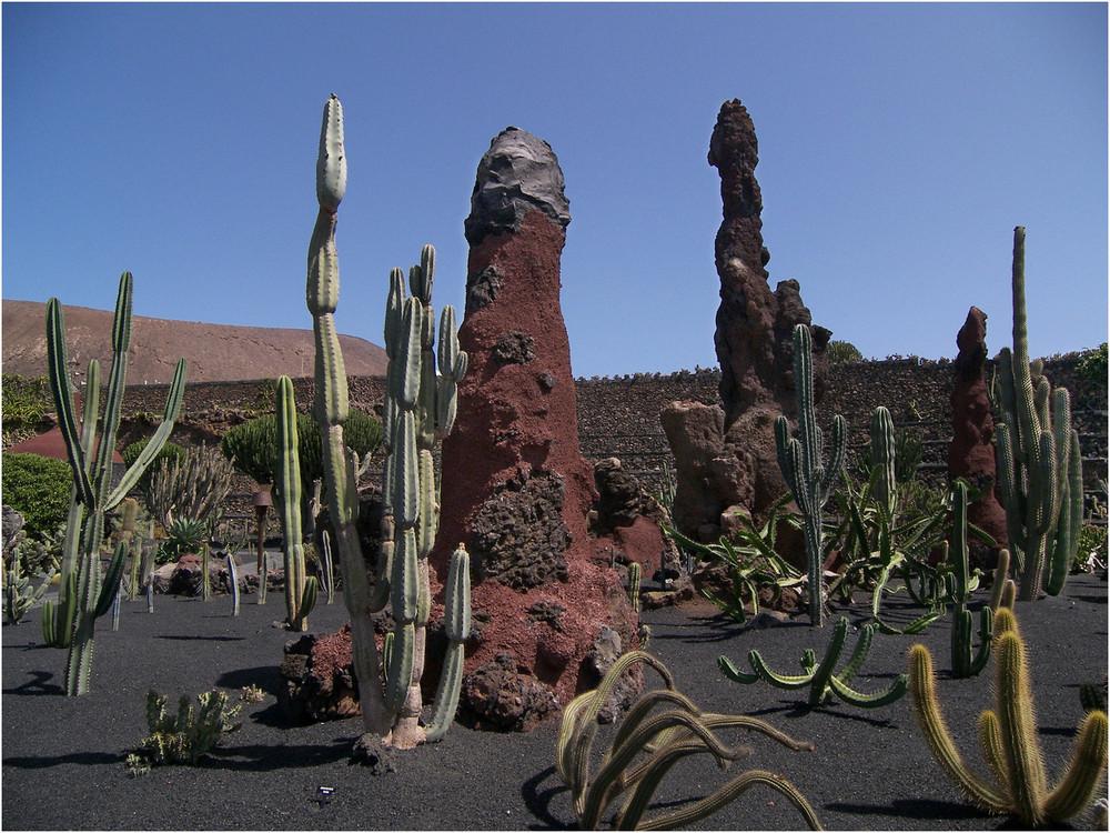 Jardin De Cactus 2 - Lanzarote