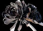 Jardin de Cactus - Schwarze Rose