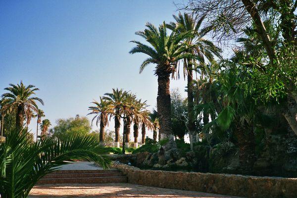 jardin de Hammam Bou Hadjar (algérie)