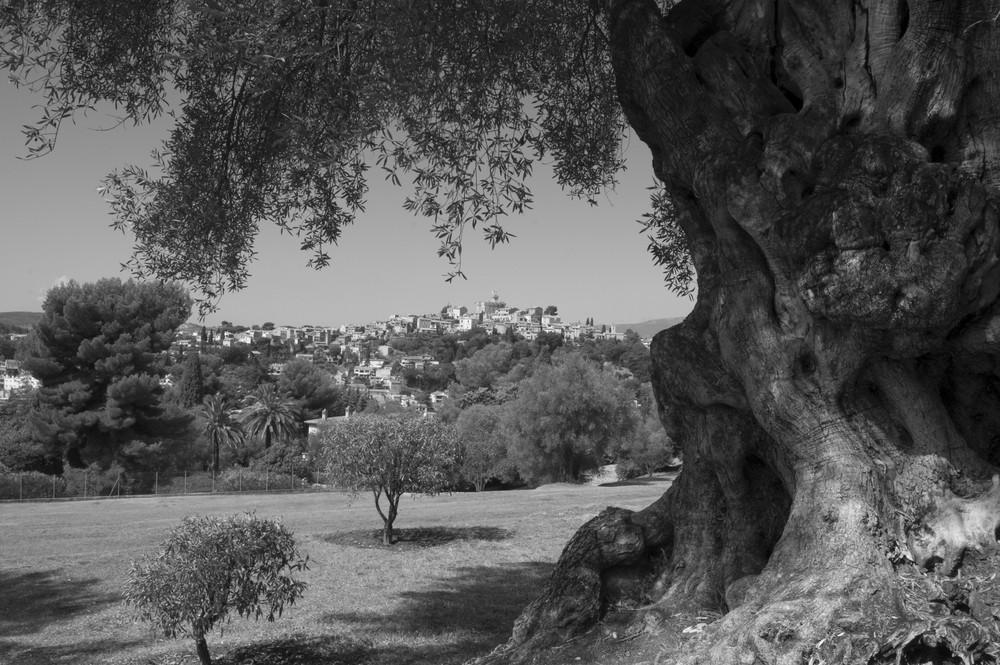 Jardin de Renoir