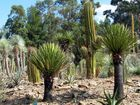 jardin de yuccas