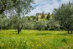 jardin d'olives