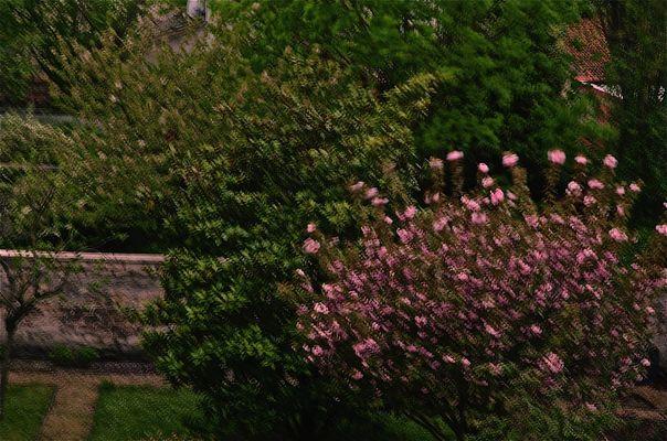 Jardin duveteux