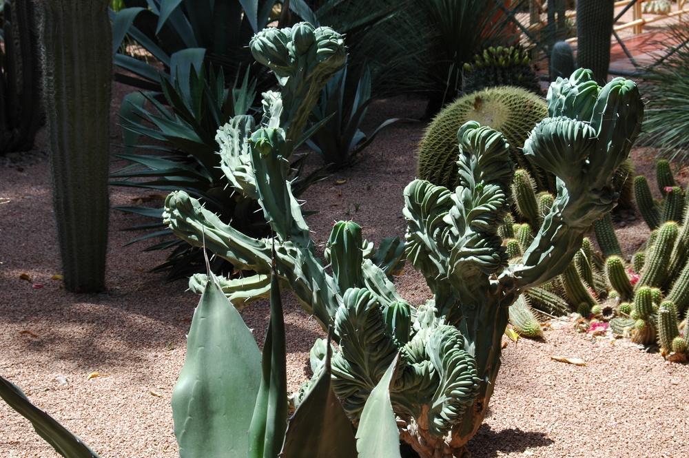 Jardin MAJORELLE - Plante dont je ne connais le nom -