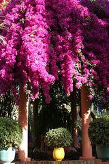 Jardin Majorelle von Yves Saint Laurent in Marrakech 7