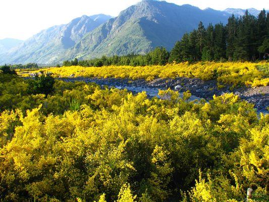 Jardín natural. Región Los Lagos - Chile
