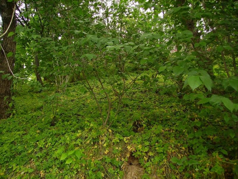 jardin o bosque?1