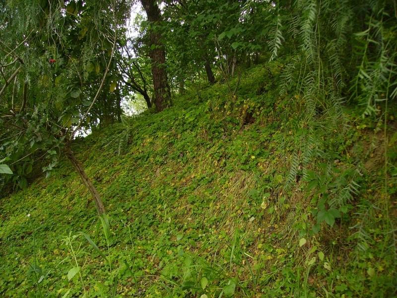 jardin o bosque?2