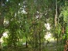 jardin o bosque?3