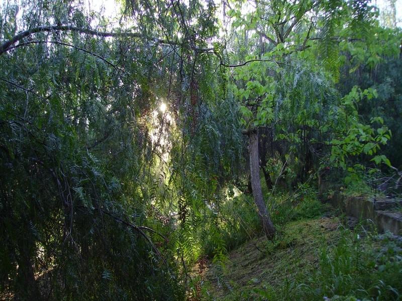 jardin o bosque?4