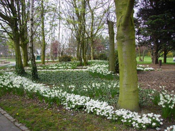 jardin public de grande-synthe au printemps