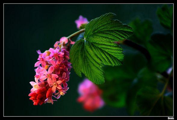 ...Jardin secret ...