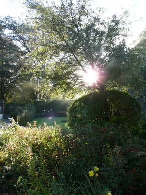 jardin un matin
