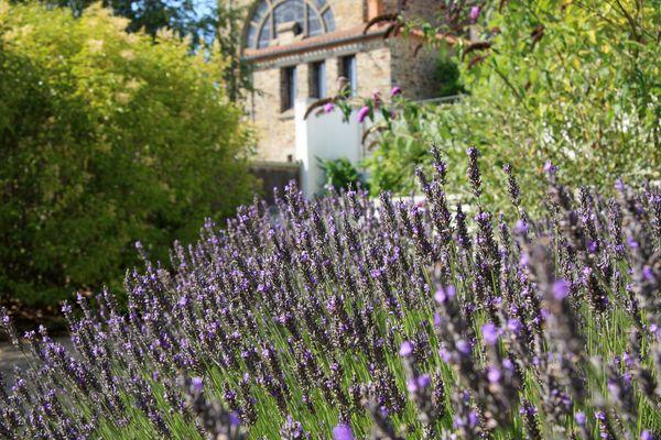 Jardin Vendée Eté 2009