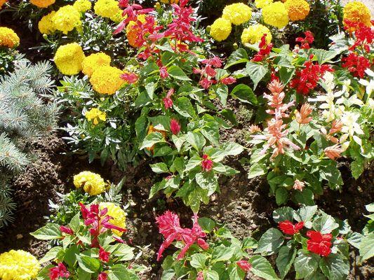 jardinière et fleurs variées