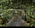 Jardins D'alfàbia (para Ferran Petit)