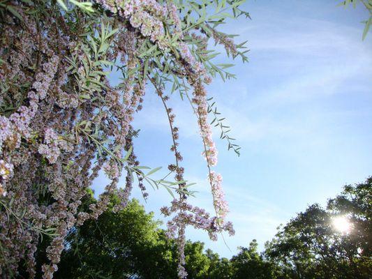 Jardins fleuris