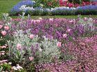Jardins suspendus ( Le HAVRE)
