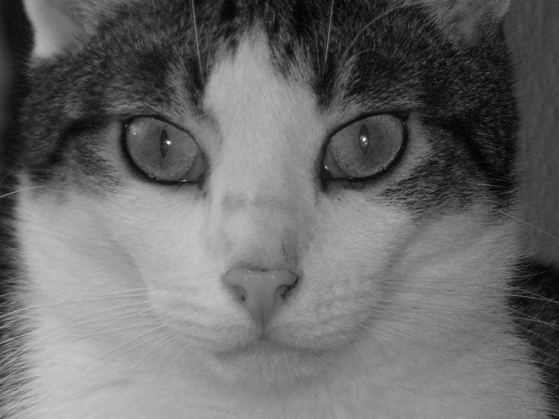 Jaspers Gesicht