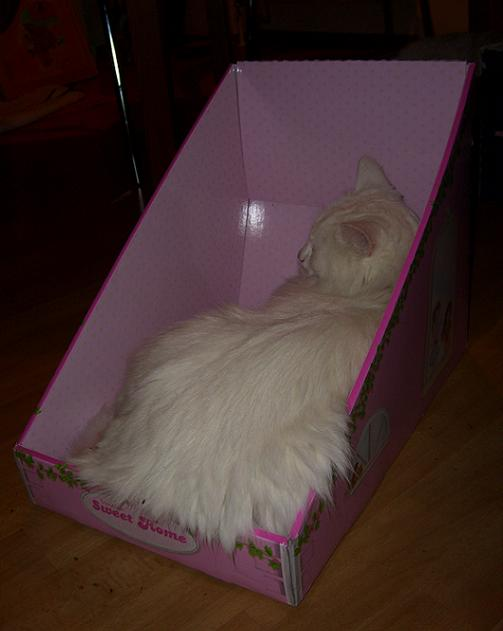 Jasy in the Box 2