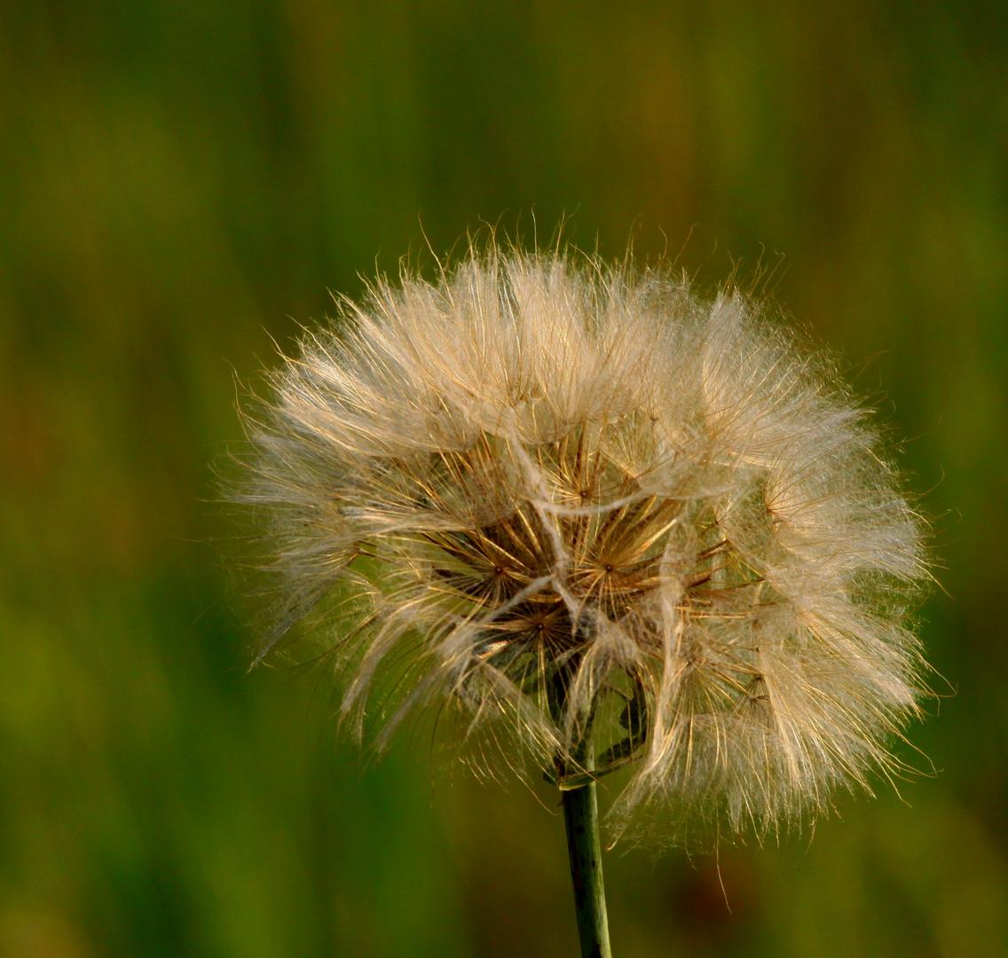 j'attend le vent