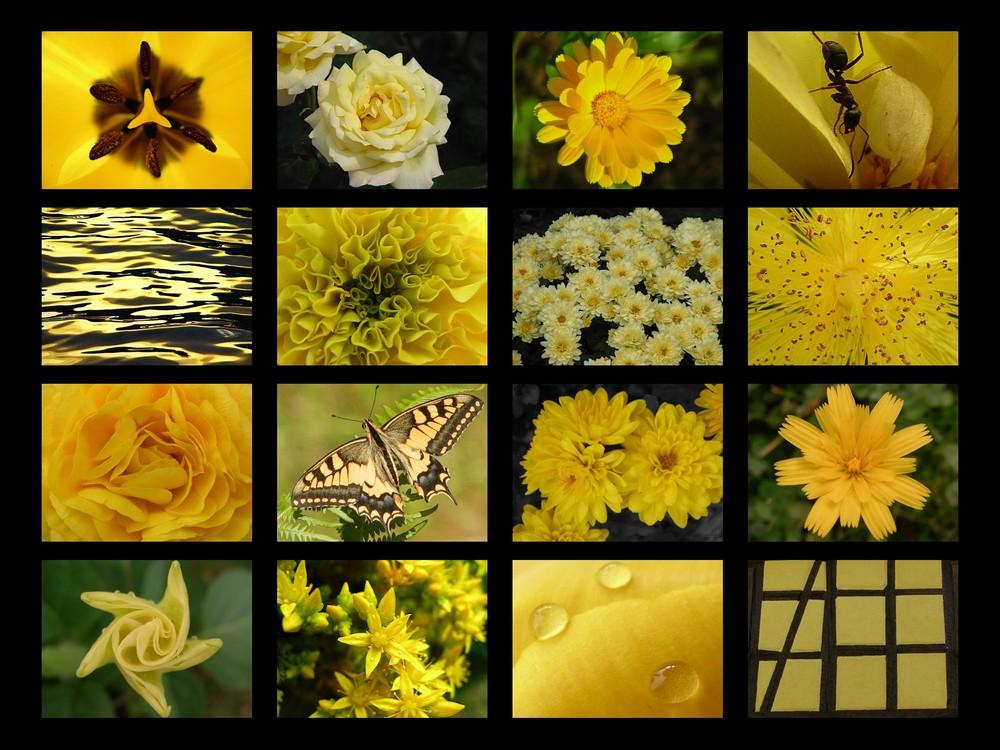 jaune comme
