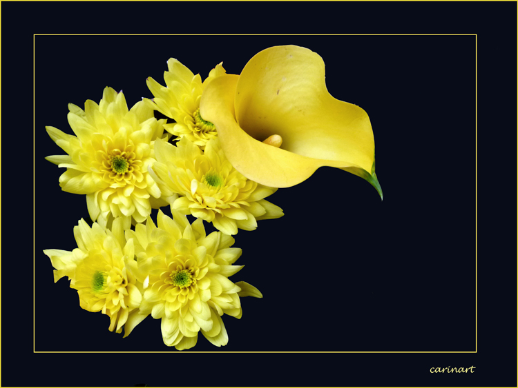 Jaune comme le soleil / Gelb wie die Sonne