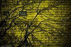 jaune et arbre
