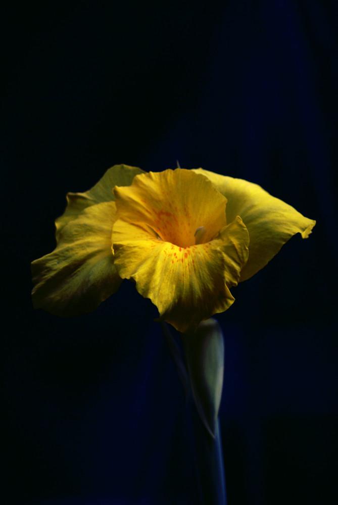 jaune et sombre