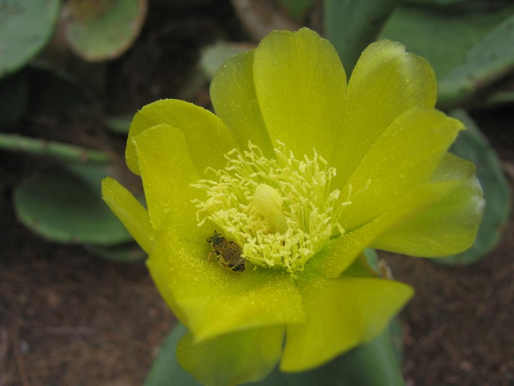 Jaune la fleur